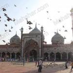 india_mahshar (14)